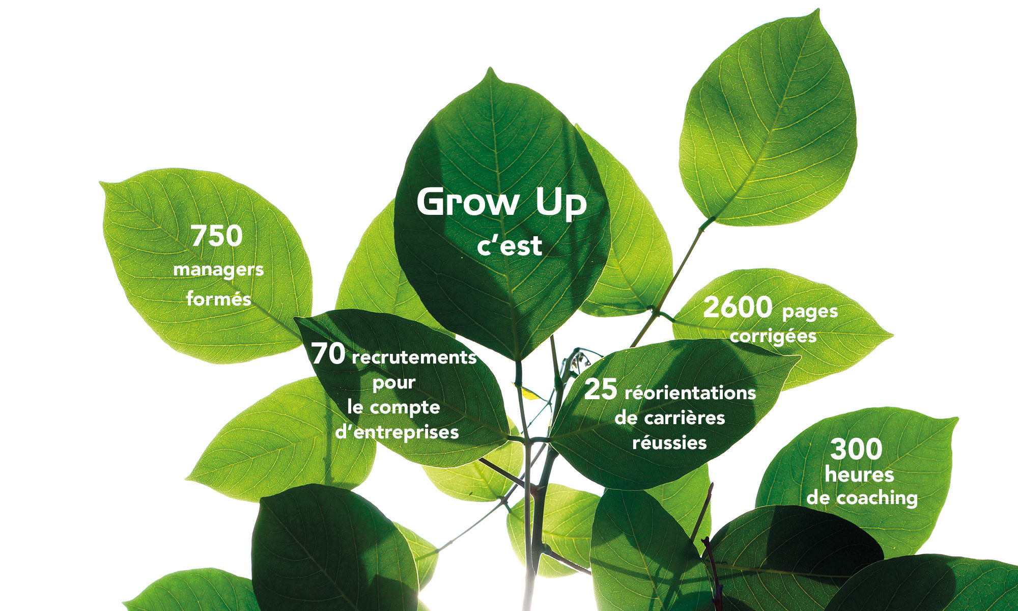 Les chiffres de Grow Up